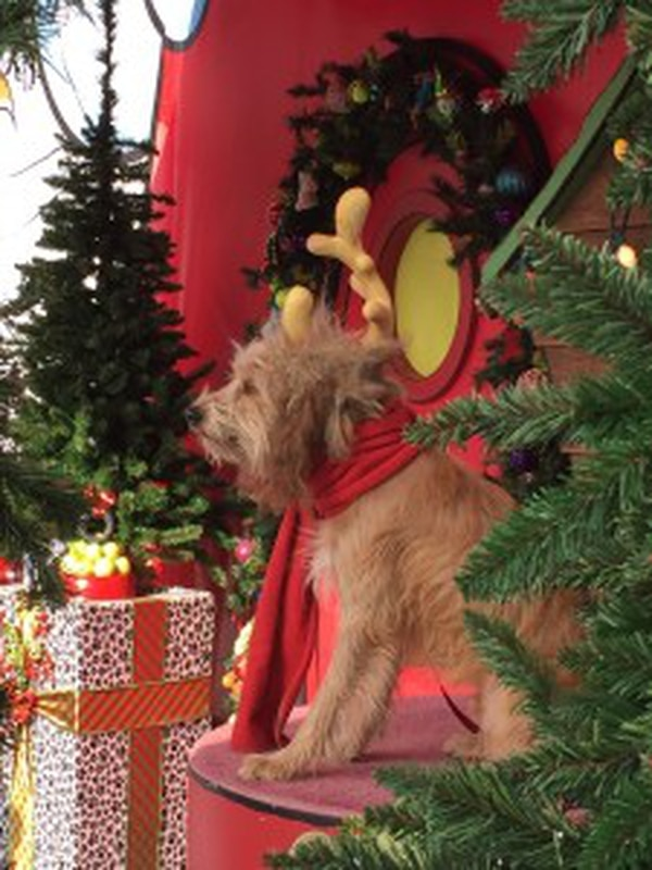 The Grinch's dog, Max, greets guests (Tanya Mardirossian/ USC Annenberg Media).