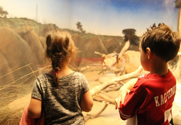 Children look at a turkey vulture in the California Science Center's Extreme Zone exhibit. | Ciara Lunger