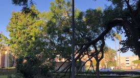 Strong winds sweep LA, USC campus left with little damage