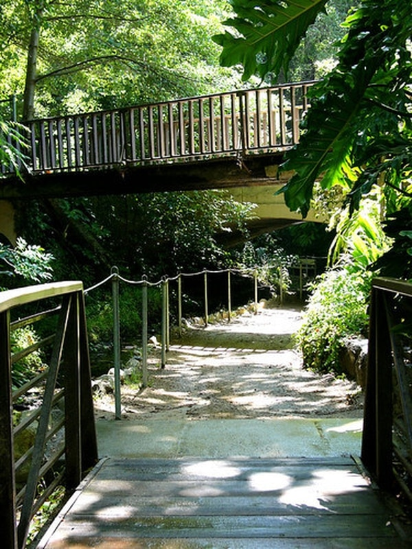 A snapshot of Ferndell Trail within Griffith Park. (Photo courtesy of Creative Commons)
