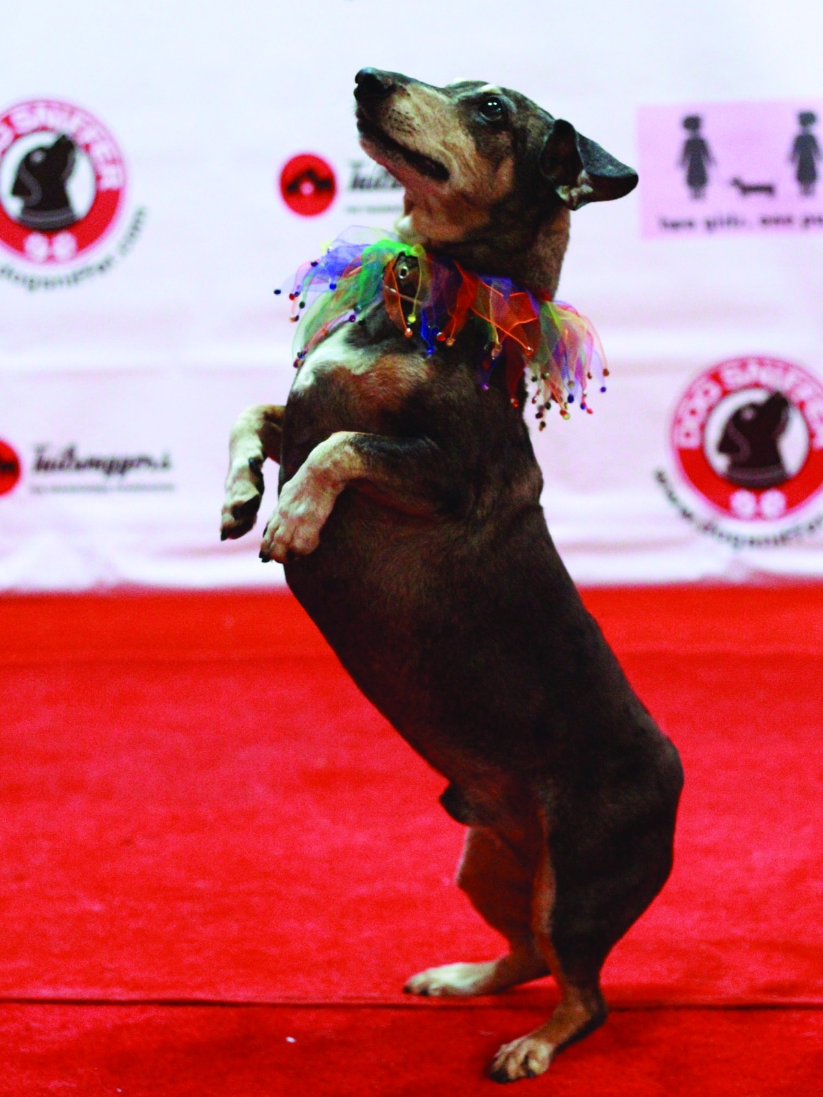 Dog Friendly Standup Comedy Event 2 Girls 1 Pup Show Celebrates