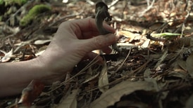 """""""Mushroom Foraging"""" takes a look into the lives of different mushroom hunters. Follow along to learn about the ups and downs of this little-known trade."""