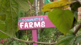 Learn about a community effort in Compton that tackles gentrification and brings farming to the local neighborhood in our story about Moonwater Farms.